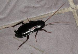 cockroach extermination near me
