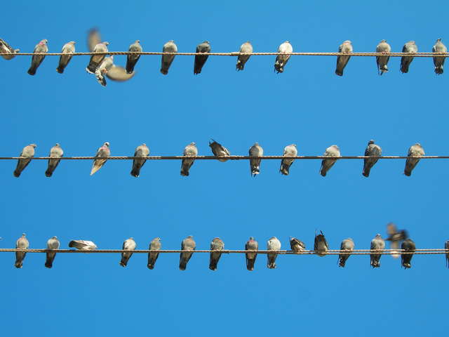 The Birds:  Woodpeckers, Sparrows, And Pigeons.