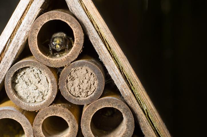 Mortar or Mason Bees- do they really drill into the brick mortar?