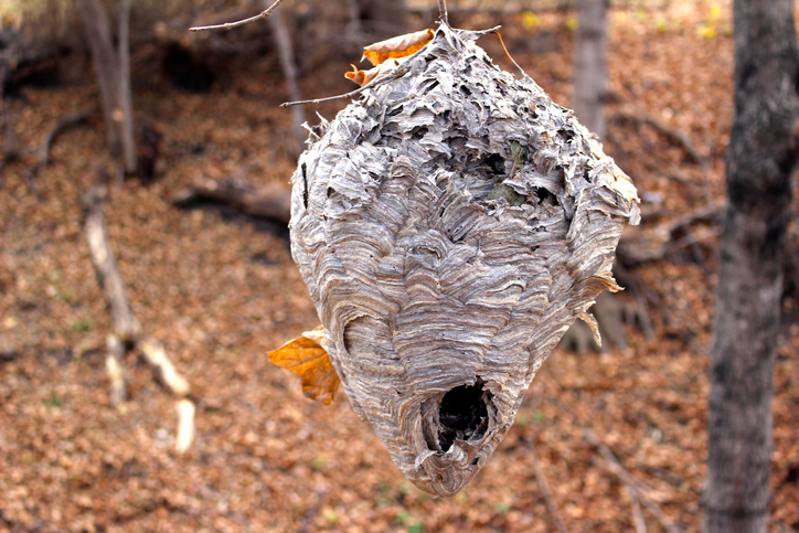 Are wasps dangerous to humans?