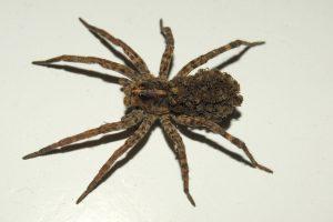 spider exterminator in Albany NY
