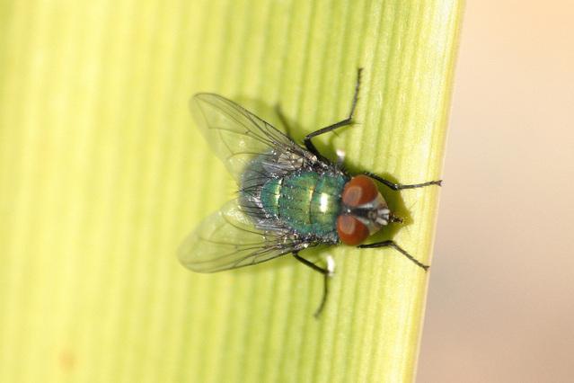 Let's talk about flies.