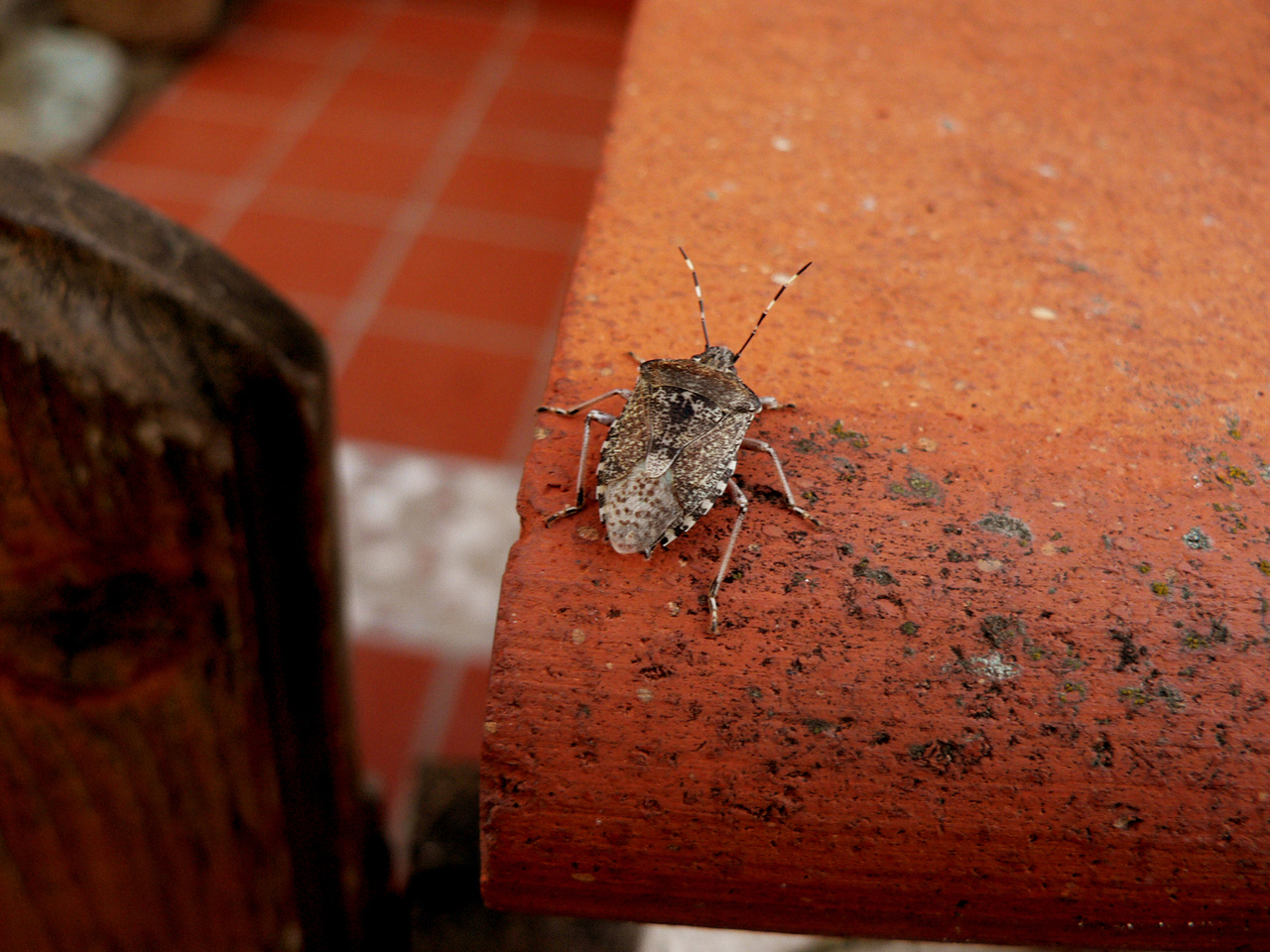 It's that time of year and stink bugs are back!