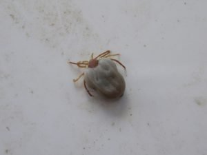 Tick control in Schenectady NY