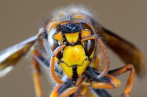 Bee removal services in Schenectady NY