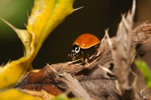 Pest control services in Schenectady, NY