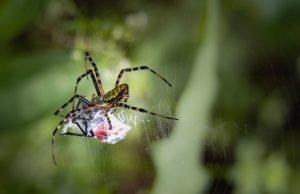 exterminators in Saratoga county NY