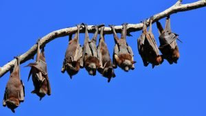 bat removal in Schenectady NY