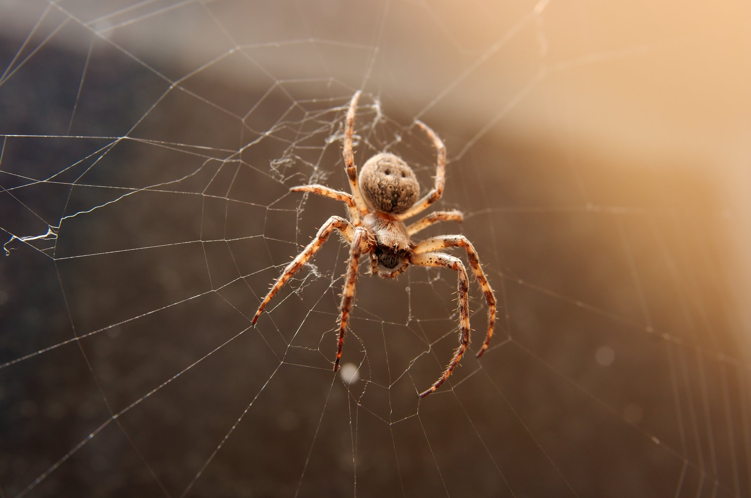 Why are there so many spiders in my house in the Fall?