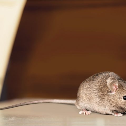 Pest Control In Albany NY
