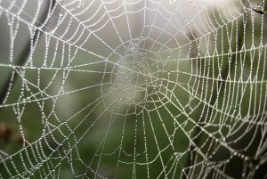 Spider and pest removal services in Schenectady, NY