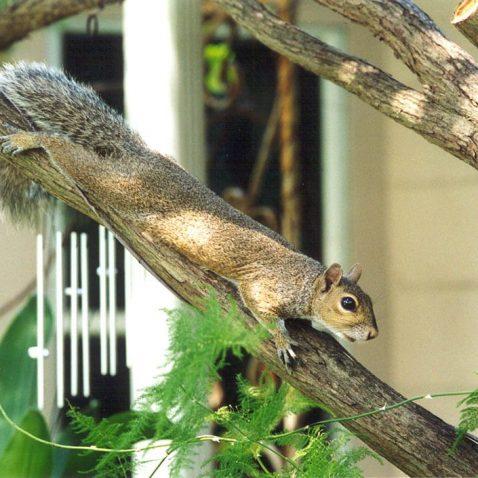Squirrel Exterminator Near Me