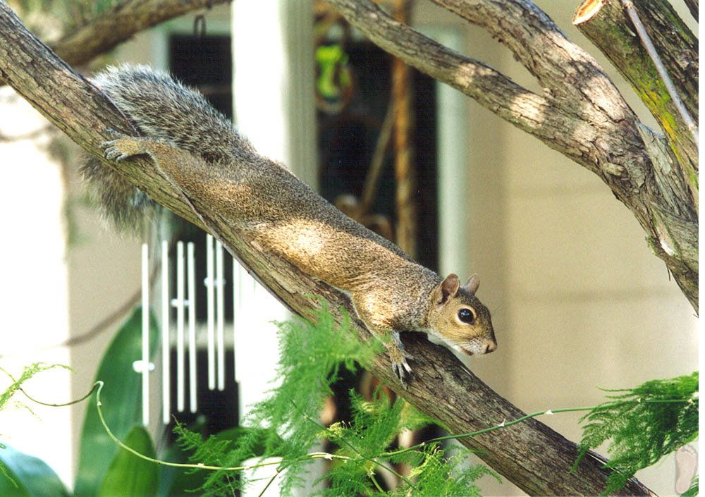 Tree branches provide easy access for pests and wildlife