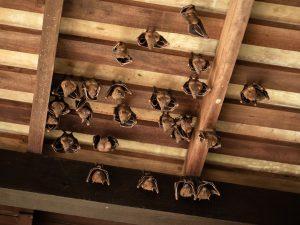 Bat removal near me