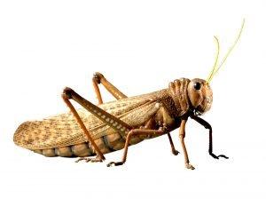 Pest exterminator near me