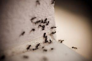 how do exterminators get rid of carpenter ants