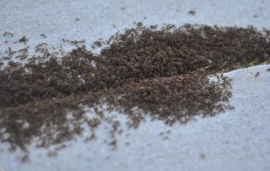 ant pest control in Albany NY