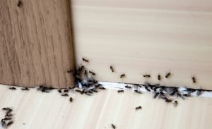 Pest COnrol Services in Clifton Park NY