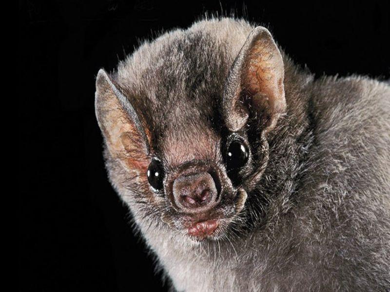 bat removal saratoga springs ny