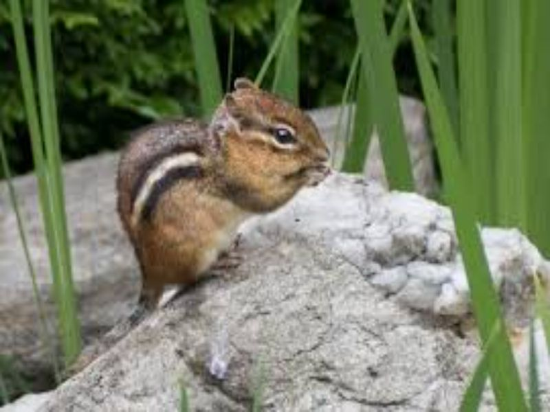 upstate wildlife and pest control