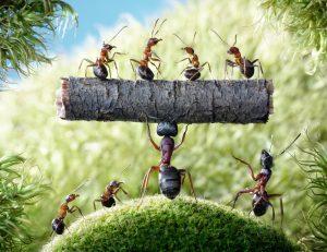 Carpenter ant pest control near me