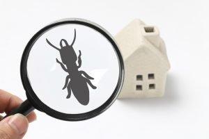 Ant pest control Albany NY