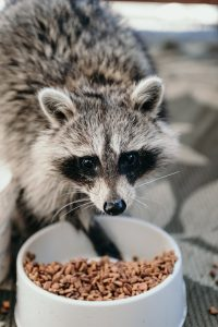 Raccoons and nuisance pests near me