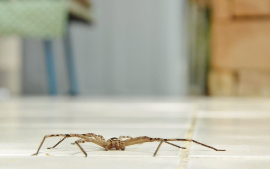 5 common places to check for pests in and around your home
