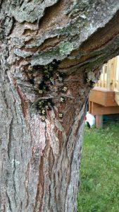 bee control in Clifton Park NY
