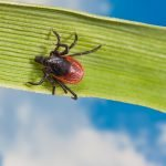 tick pest control in Schenectady NY