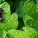 ant pest control near me