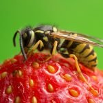Bee pest control near me