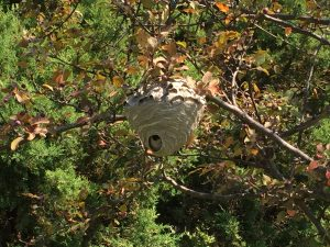 Bee pest control in Saratoga Springs NY