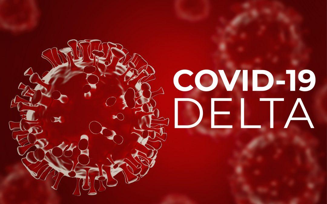 Do Pests Transmit Coronavirus?