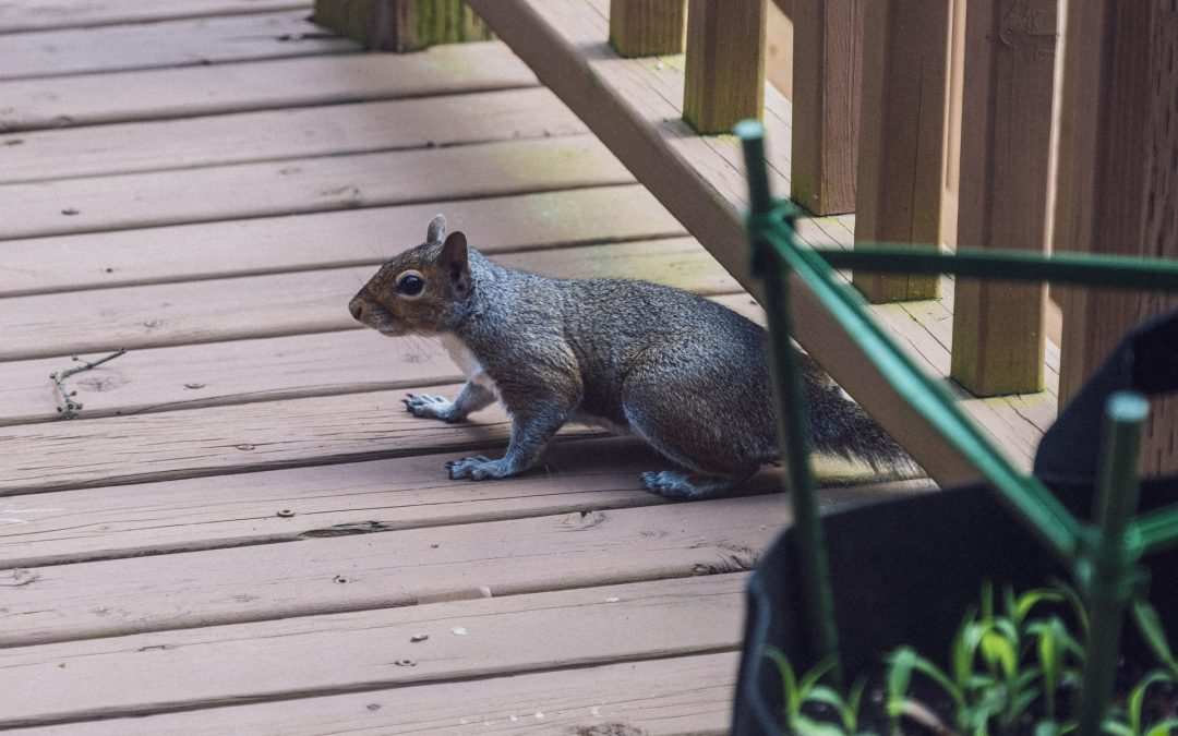 Exclusion services can keep unwanted wildlife from entering your home this fall.