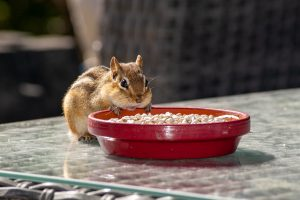 Pest Control Services in Schenectady NY